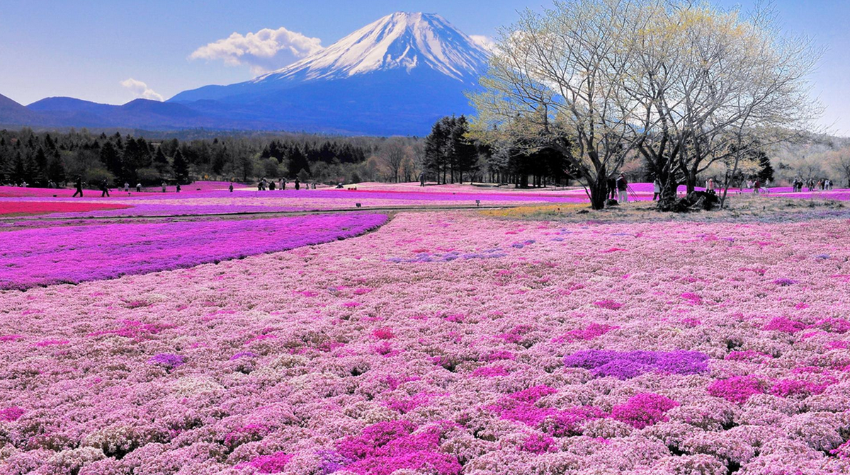 Culture Trip On Twitter The 16 Most Beautiful Places In Japan You Never Knew Existed Http T Co Avnoytwaik Hitachiseasidepark Travel Http T Co Gzaftpkwdk