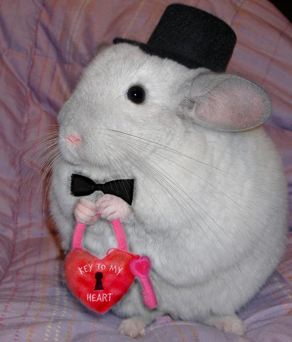 Wow, this chinchilla is the #TearInMyHeart @twentyonepilots @therave today! #FM1021LOVE http://t.co/MOX2Fe1PYz