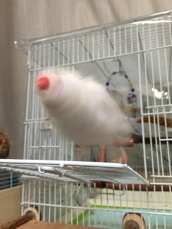 「くらえ、小鳥ドリルっ!!!(ギュイイイイイイ」みたいな画像もわたくしだいすきですよ。