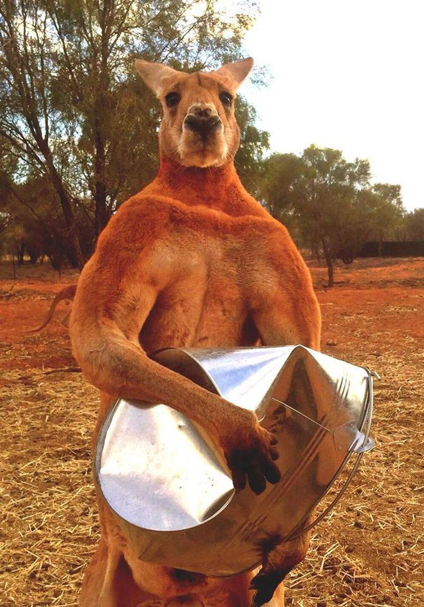 Stupid bucket. http://t.co/FowzVR5ebz http://t.co/D0zE8eCXGV