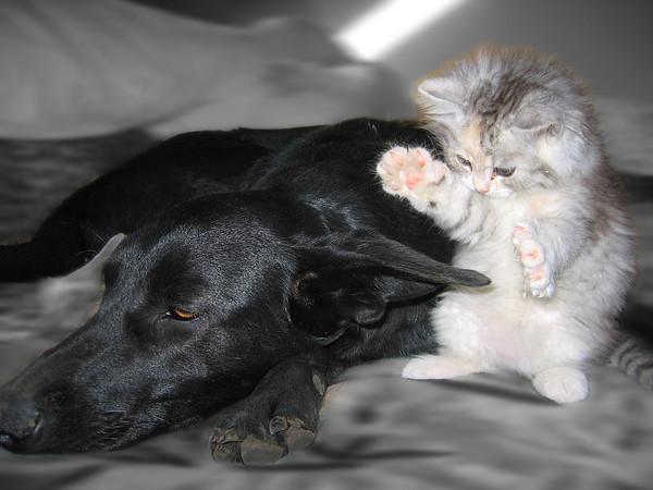 Музыкальные, картинки и фото кошек и собак с надписями