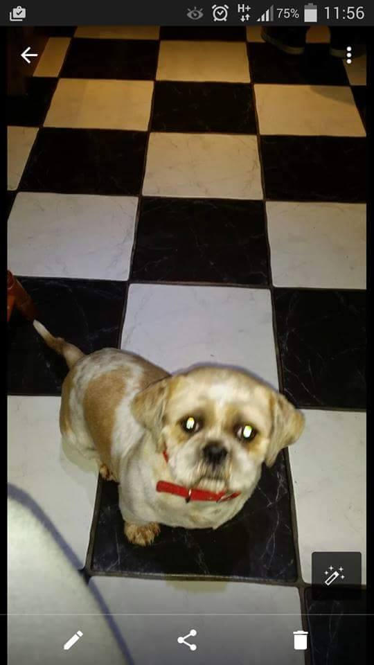 Buster is an adorable 4 year old Shitzu abd he's looking for a loving home.  Please RT  http://t.co/Cpf2mGNKoK http://t.co/MiF6UzJIQA