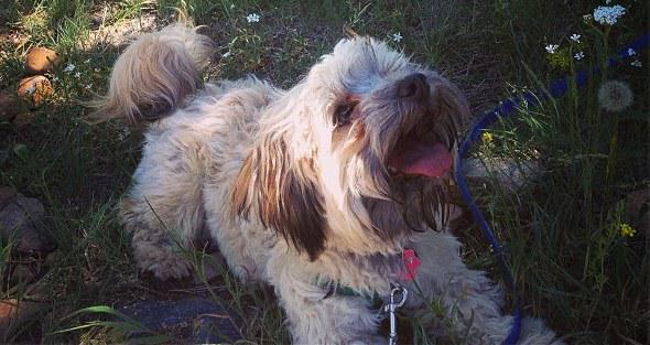 We need to find a new home, without small children, for our beloved Buttons. He is a great dog. Know anyone? http://t.co/uRidpLoc4i