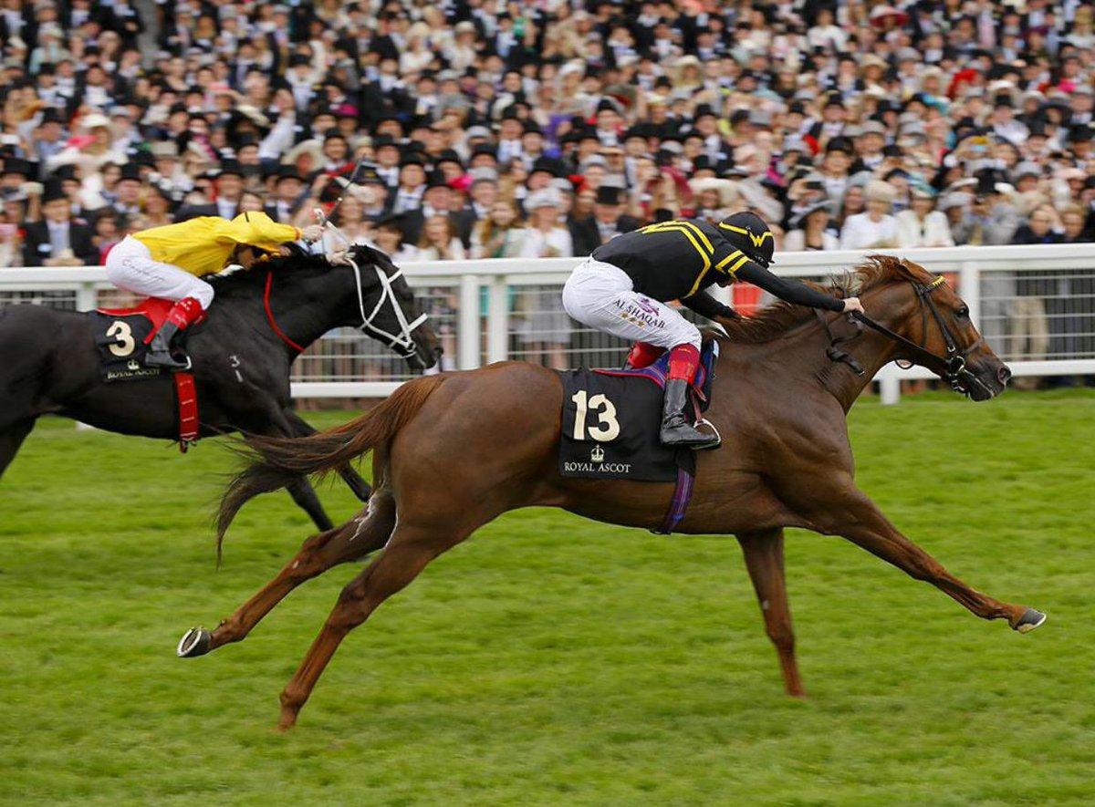 Undrafted – Diamond Jubilee Stakes 2015