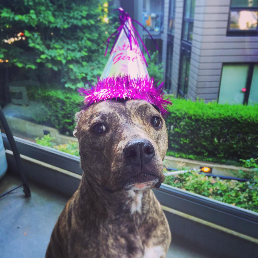 Guess who recently turned 10? Peanut the #pitbull did!  #hugabullbc #rescue http://t.co/NOq3cUYZTl