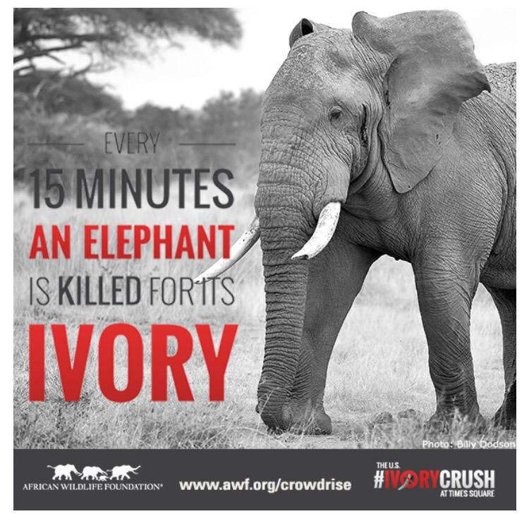 Help @awf_official reverse the trend & join the #IvoryCrush movement: http://t.co/KaI1CR2YLq Please RT for our