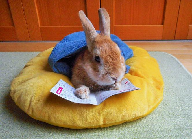 今日は雨なので本など読んでみたがほどなく心地よい眠りに落ちる。 pic.twitter.com/caLKP3ig2B