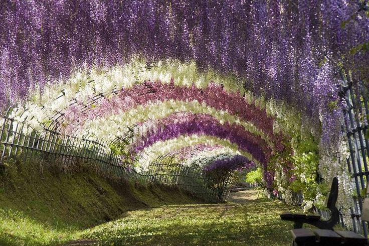 PICTURE OF THE DAY: the incredible #WisteriaTunnel at Kawachi Fuji Gardens, #Japan. Photo credit: @Shutterstock http://t.co/pbwsefoDOc