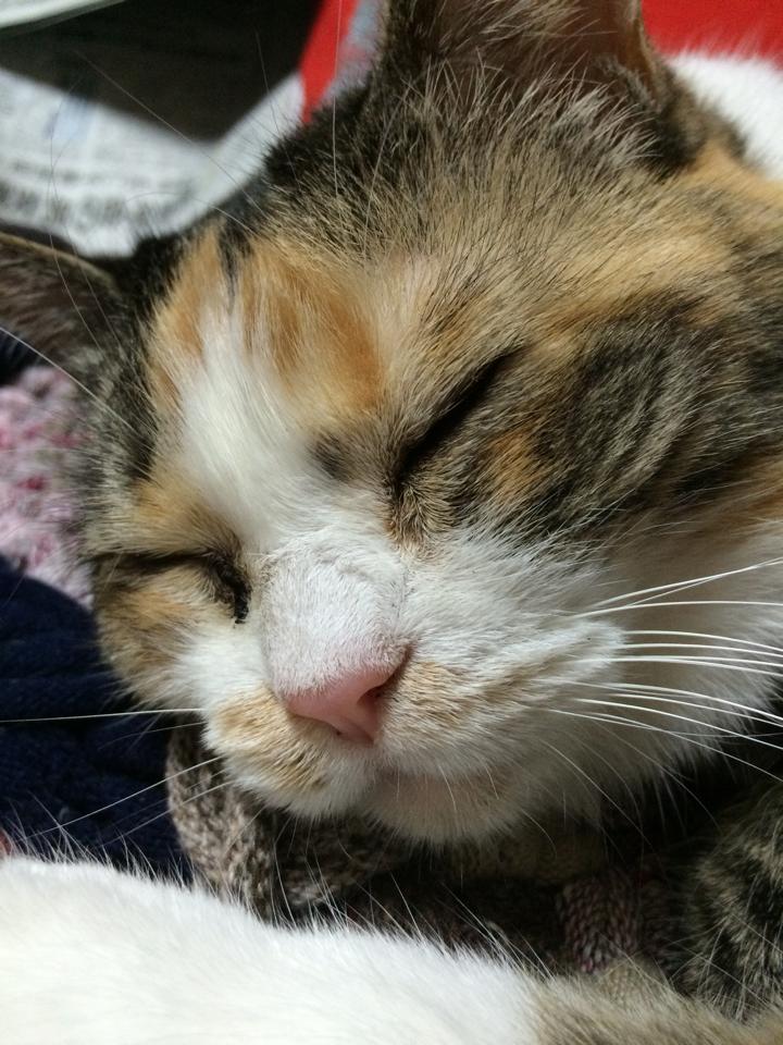くしゃくしゃに触ってやりたいけど寝てるから我慢 http://t.co/2kCDdH8fpz
