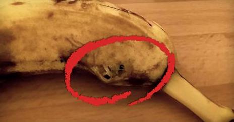 Spinne Aus Banane