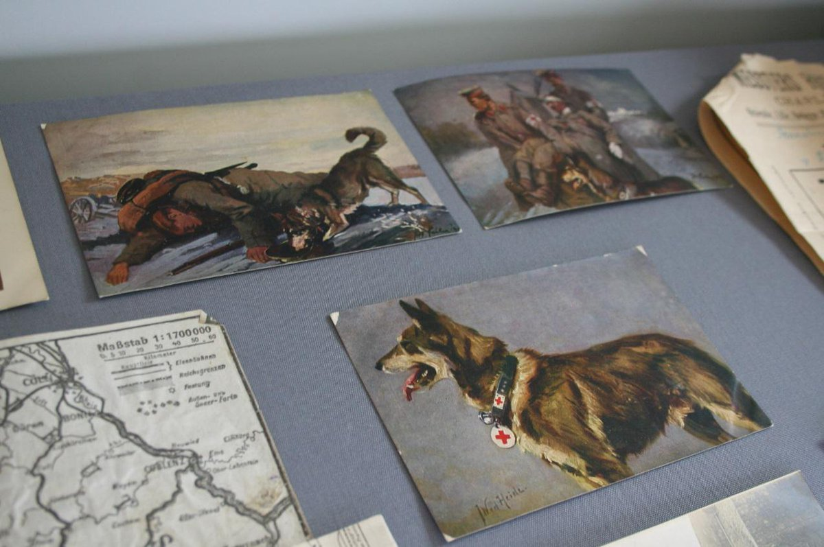 .@ace_national one of our fave collections is these postcards of German medical dogs from World War One. #IAD15 http://t.co/HEOfF9rxs2