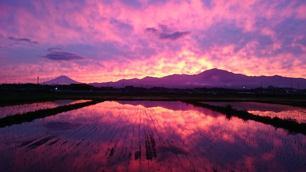 夕焼けが田んぼに反射して綺麗だった。 pic.twitter.com/bOChdCFbuj