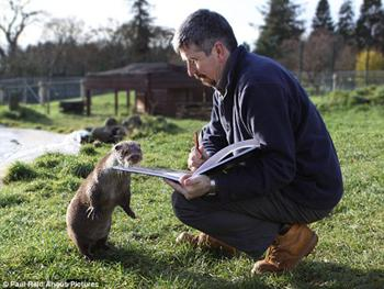 We'd like to salute the tireless work of volunteers teaching Britain's otters to read http://t.co/lFYEyeoPxj
