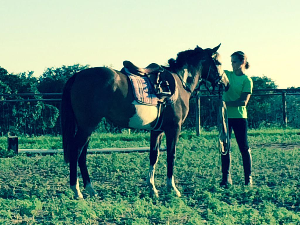 My wife introducing our 14 month old filly to a bit and saddle last night. #Horses #SpottedThourghbred http://t.co/hpRs90goS9