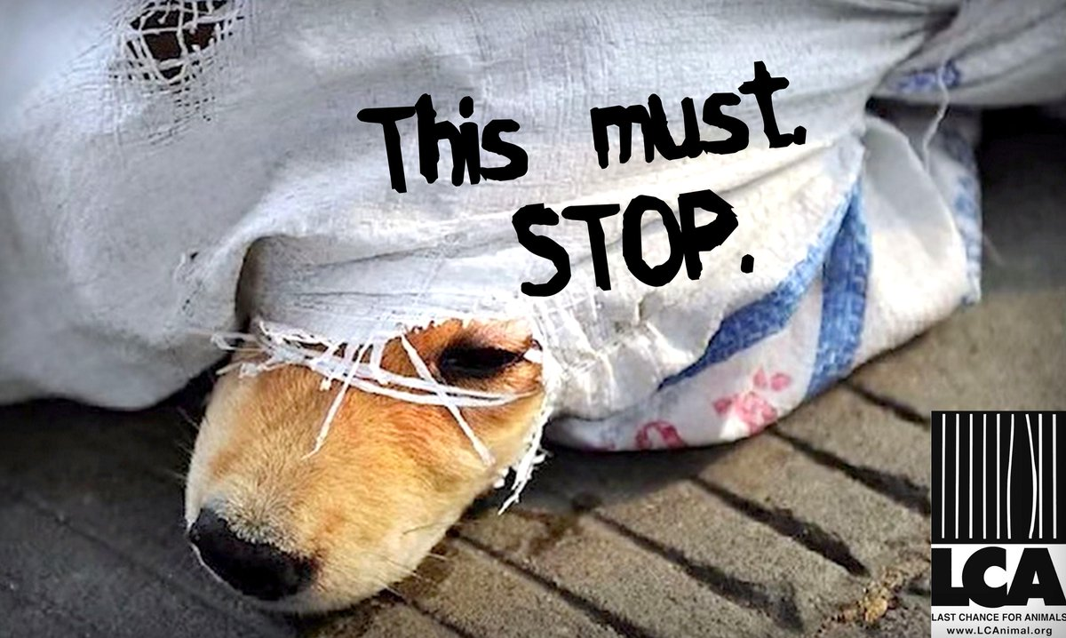 We Must Stop the Yulin Dog Meat Festival. SIGN the PETITION and Please RT. http://t.co/ARgp3boORU #StopYuLin2015 http://t.co/7rpIeNpaJY