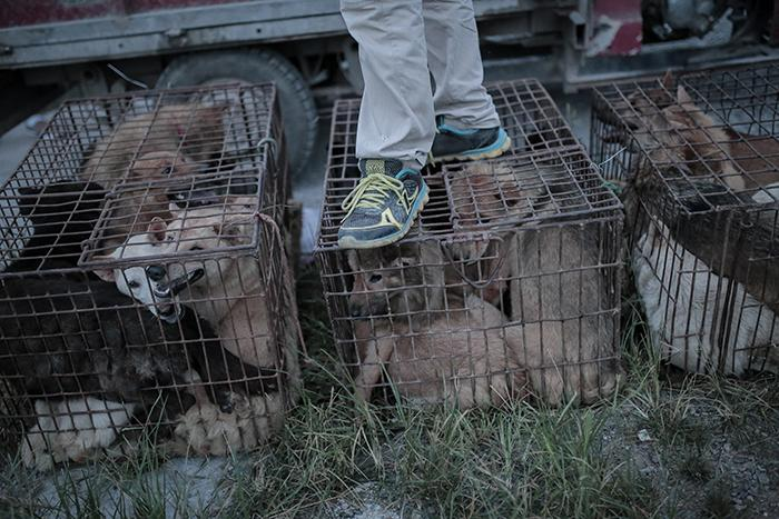 Please Sign and RT this petition to help #StopYuLin2015 #StopYulinDogMeatFestival https://t.co/79rTE4Llji http://t.co/E8K3awqBvE