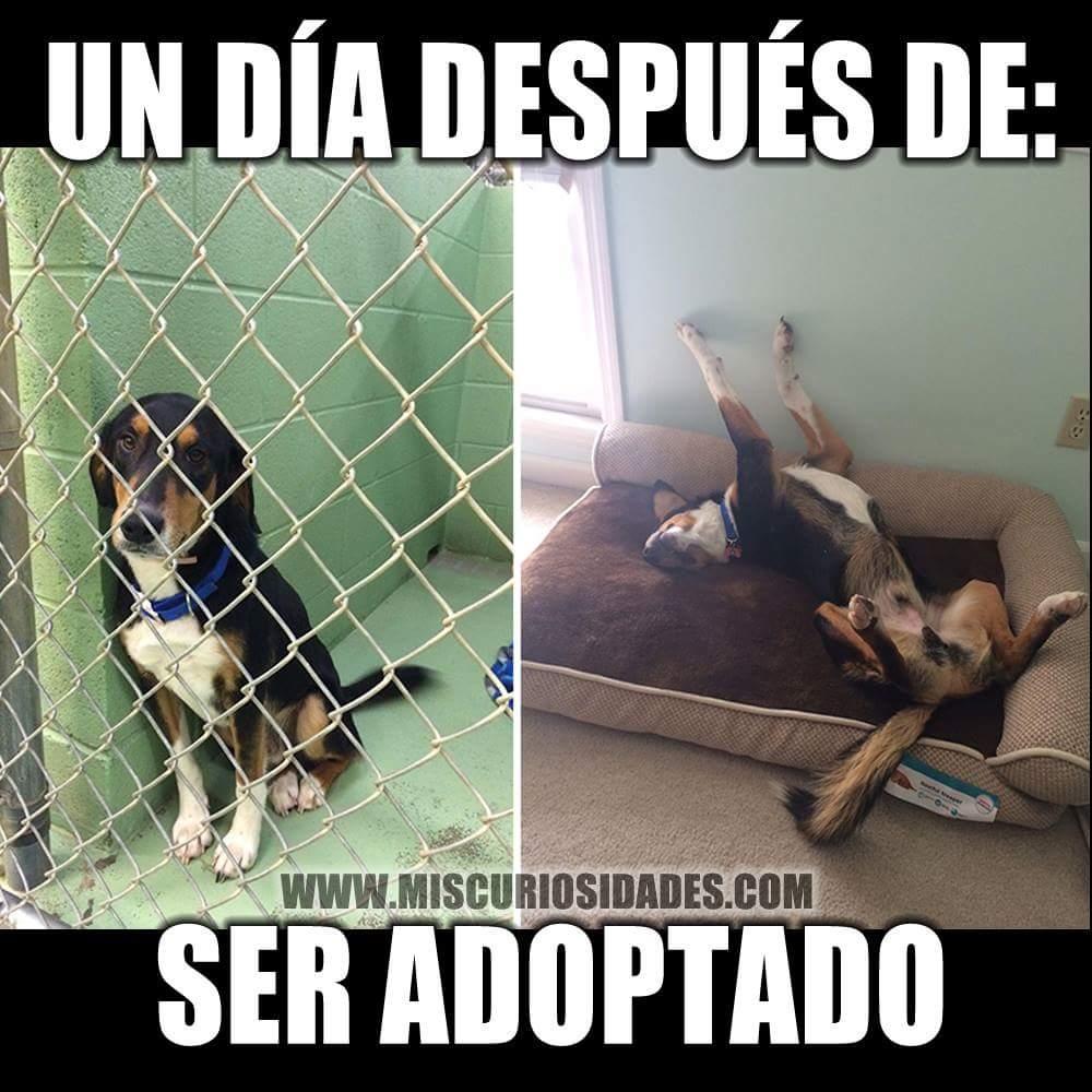 #NadaMejorQue adoptar y darles una nueva oportunidad. http://t.co/oinlTTiBqV