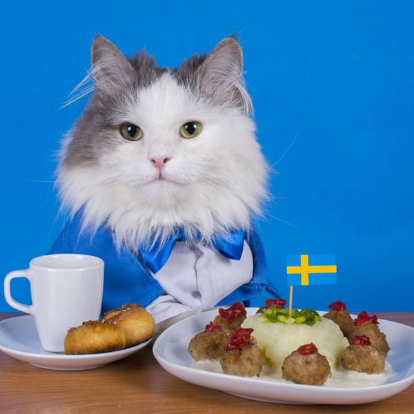 world cup cats on twitter look at this swedish cat ussoccer wnt