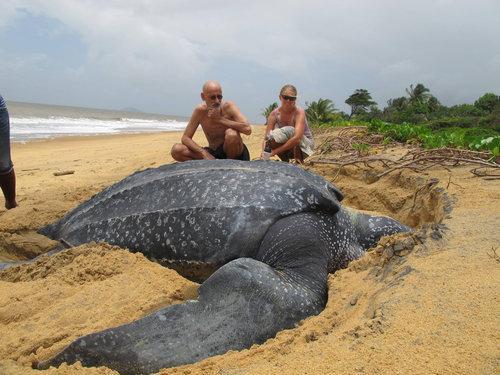 これが世界最大種のウミガメの写真…2つの意味で驚いた! http://t.co/7jJDOdRGJB @lbqcomさんから  こっ、これは・・・!! http://t.co/DH9DQ5nnqT