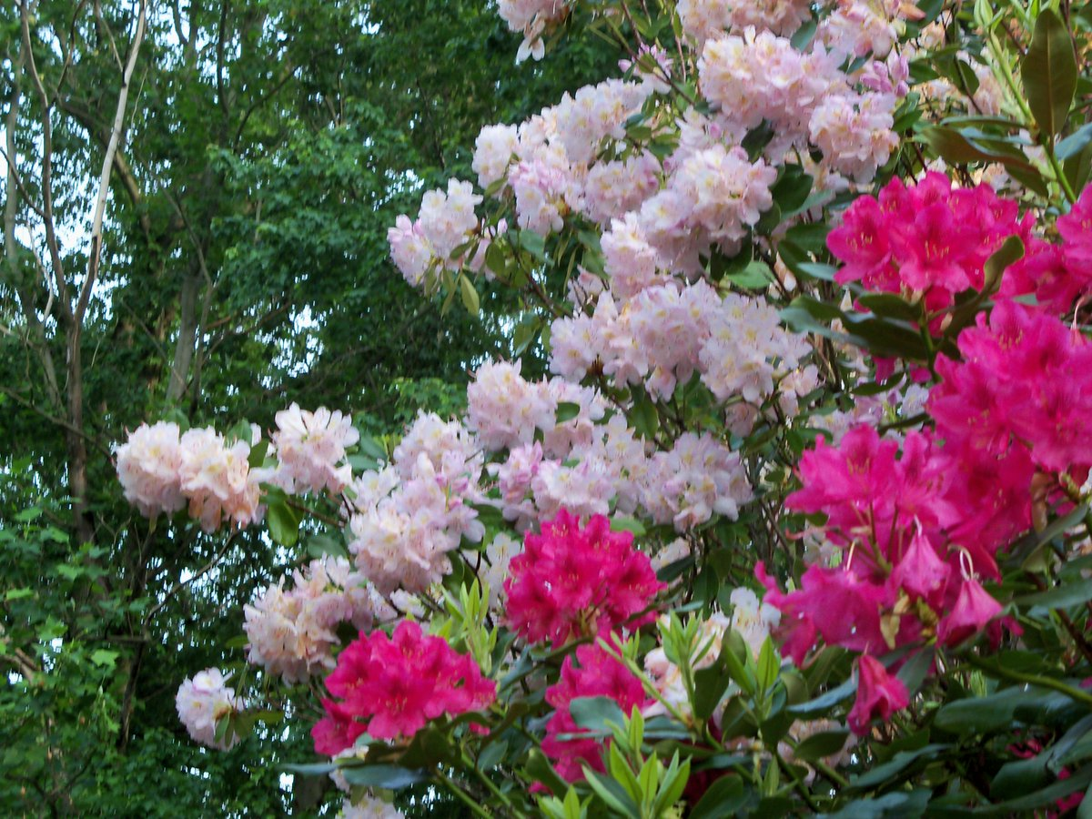 Flowers from  shrubs my backyard - enjoy :( http://t.co/iTNaPX15cZ
