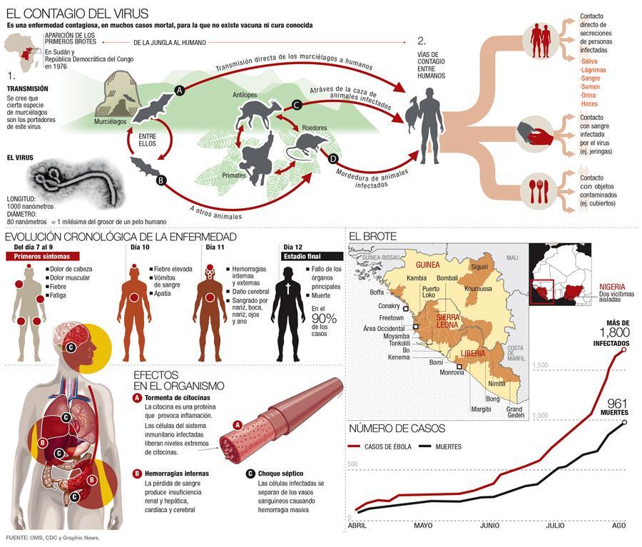 Resumen del #Ebola en una imagen  #microMOOC http://t.co/mS489NTax9