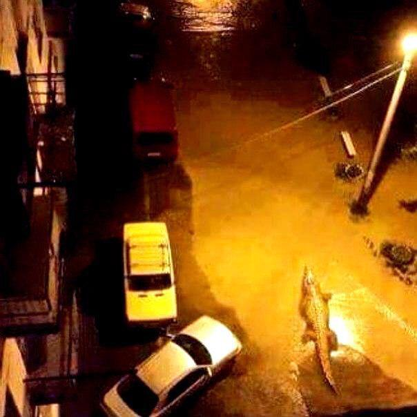 #BREAKING Jumanji situation in Tbilisi after animals escaped from the Zoo after massive flood in Georgia
