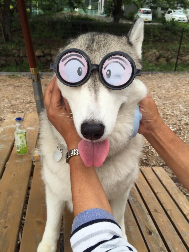れいばんのサングラス。 pic.twitter.com/DJN369r4Yg