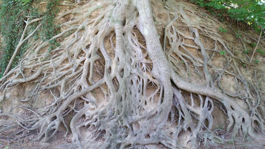 #mathphoto15 #lines tree roots http://t.co/rJwgqWwb00