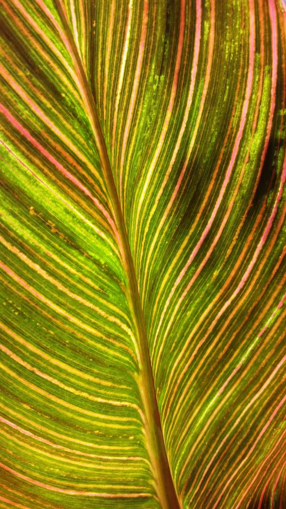 #mathphoto15 #lines colorful leaf http://t.co/FCySTY7cTw