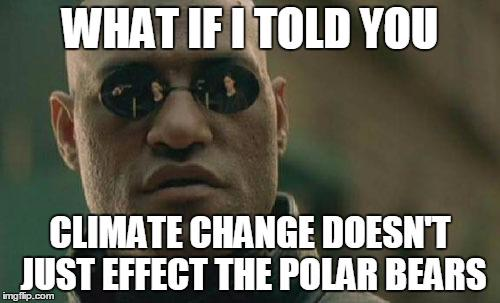CHgWLY8UsAAw9sk climate change memes (@climatememes) twitter,Climate Change Meme