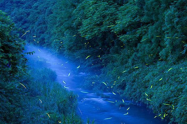 【七十二候《腐草為蛍(くされたるくさほたるとなる)》……蛍が幻想的な光を放つころ】 tenki.jp/suppl/yasukogo… 梅雨を迎え、むしむしと湿度が高くなってきましたね。七十二候も次候へとうつり、第二.. pic.twitter.com/81fSGRz6cX
