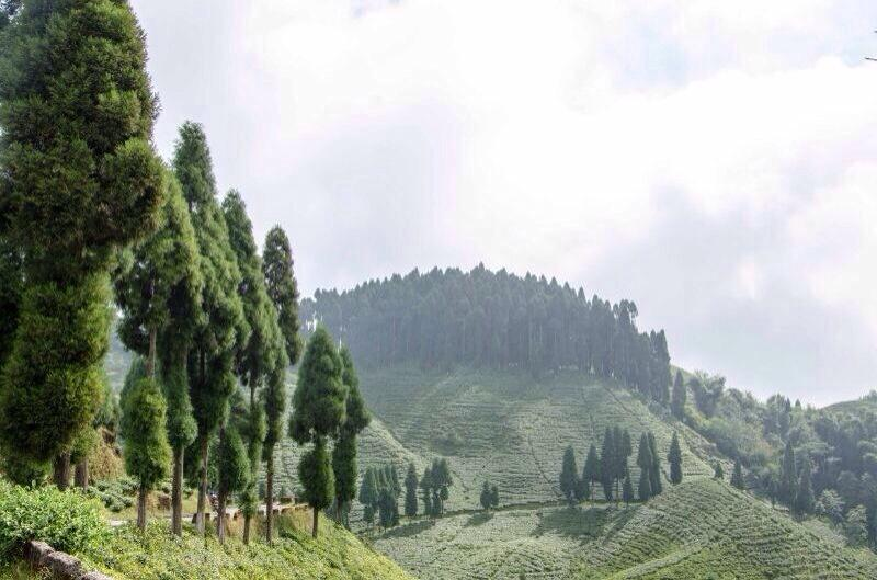 Mirik Valley, Darjeeling