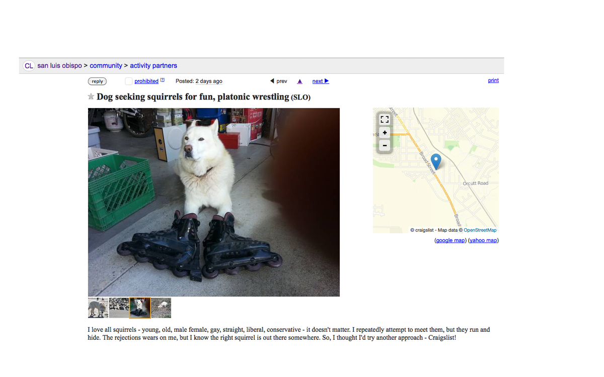 "breaking slo news on twitter: ""#craigslist ad by #slo dog seeks"