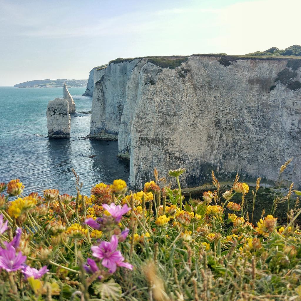 Old Harry's Rocks, Dorset http://t.co/R3rA0E461T