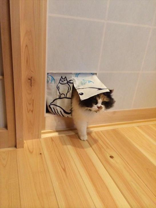 猫が障子を破って困ってる人は暖簾にしたら全て解決する happyeveryday.biz/?post_type=pos… pic.twitter.com/6ljFhzyLow