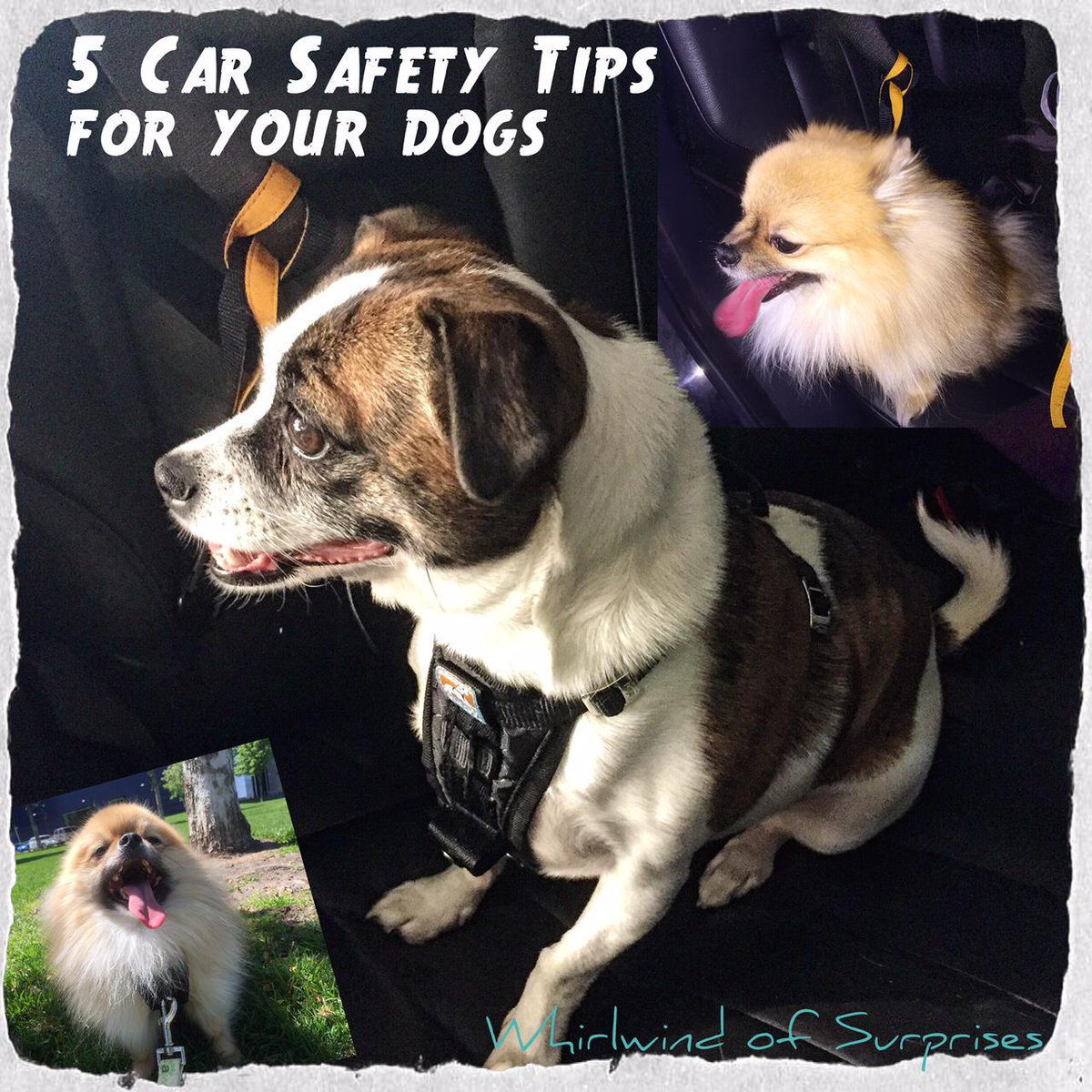 Car safety tips for your dogs