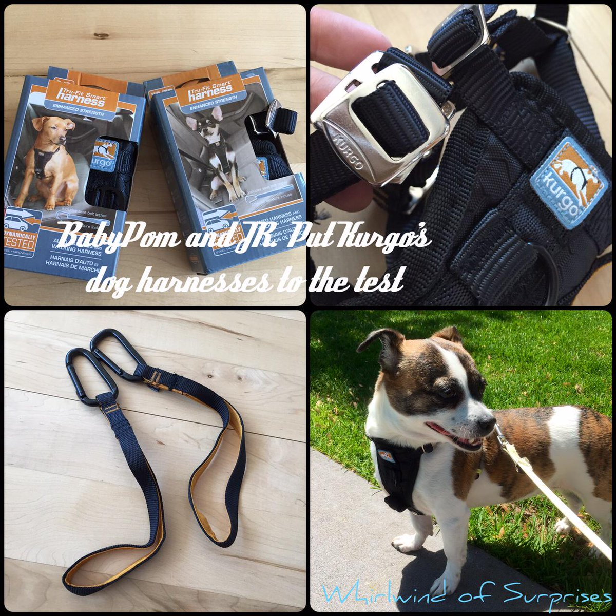 Kurgo dog harness review