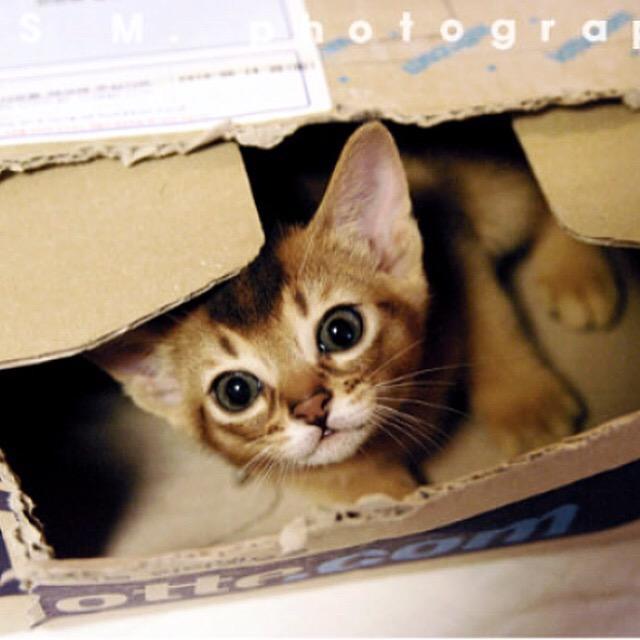 술김에 붓다사진 대방출 2 #abyssinian #catinstagram #cat http://t.co/Ciemy6MjjS