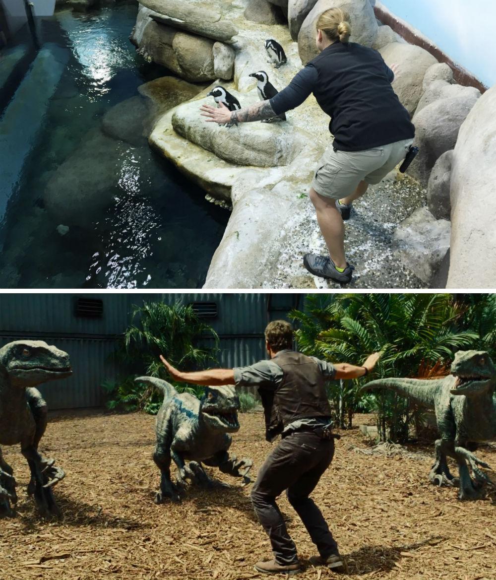 Cười đau bụng với hình ảnh nhái phim Jurassic World của các nhân viên vườn thú - 77705