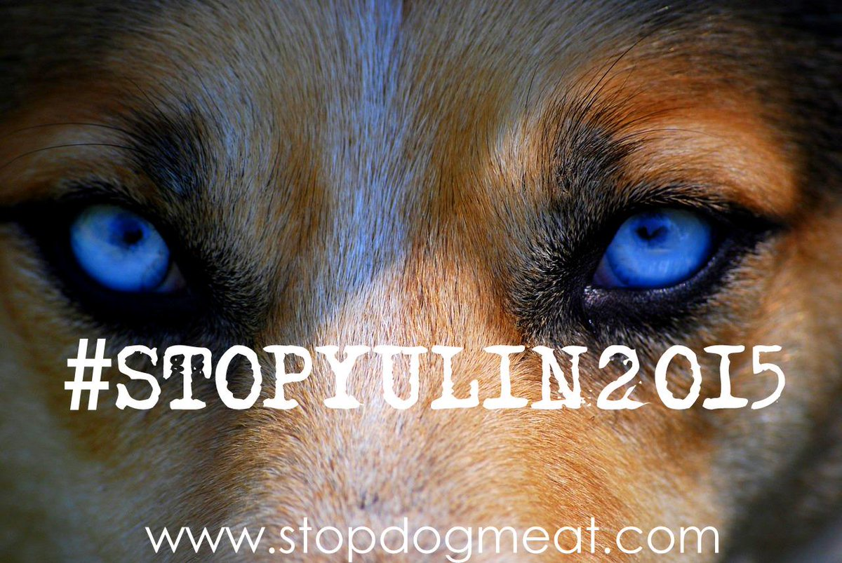 #TWEETSTORM for the Animals. Please RT #StopYuLin2015 http://t.co/tavnqV6V64