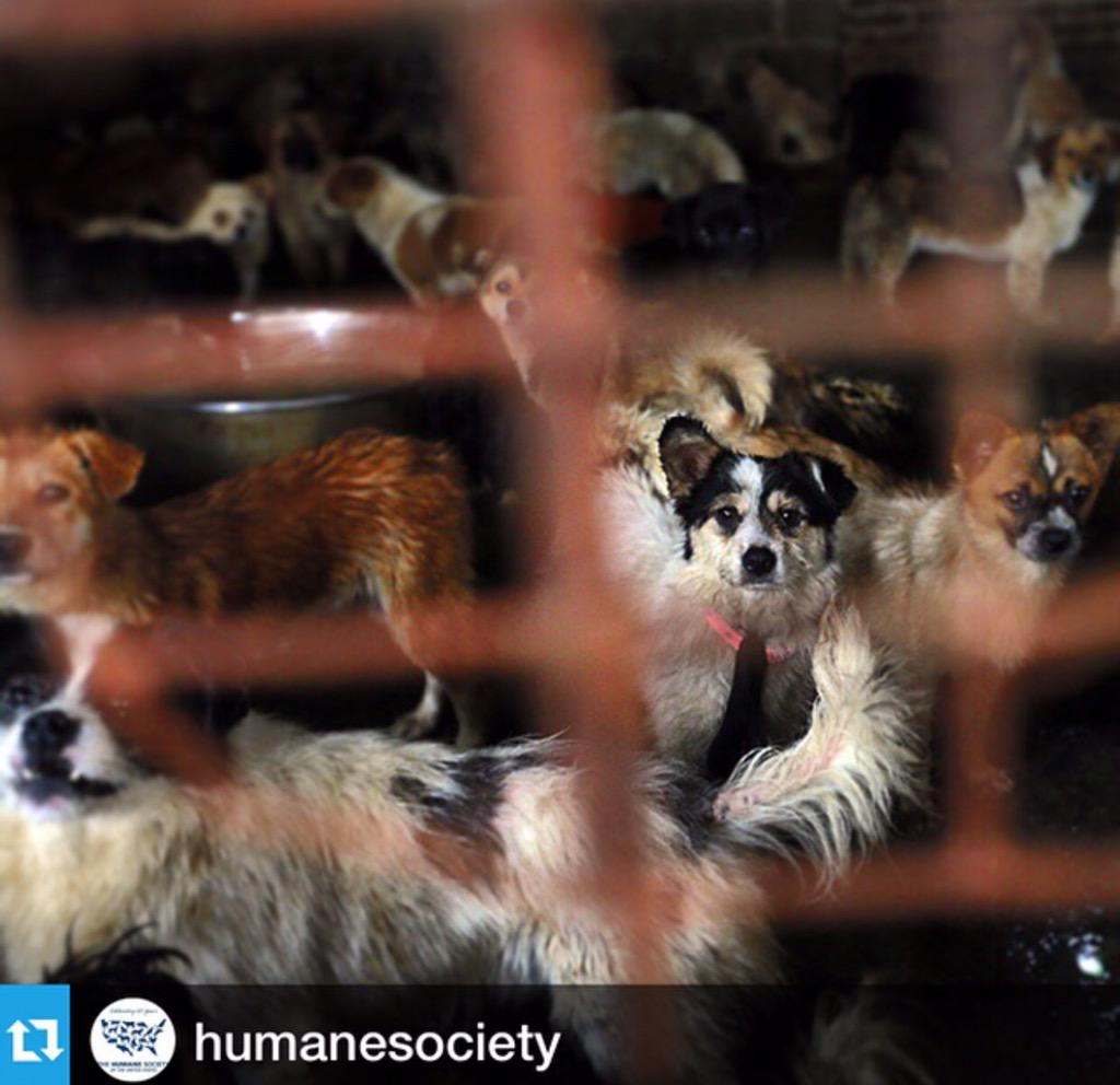 Use your voices + take action. End the dog meat trade #StopYuLin2015 @HSIGlobal @HumaneSociety http://t.co/wceln7Hyxr http://t.co/I0B4chnLiy