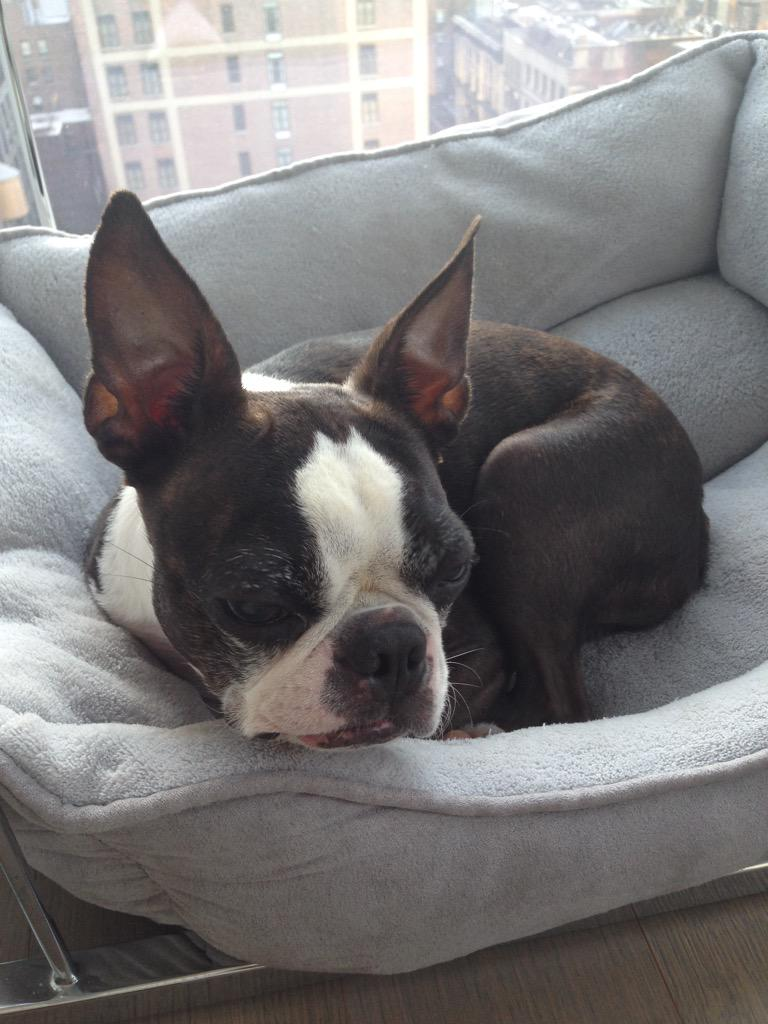 Georgina Leigh On Twitter Love This Bat Pig Dog Httptco
