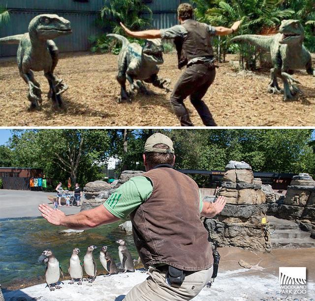 Cười đau bụng với hình ảnh nhái phim Jurassic World của các nhân viên vườn thú - 77703