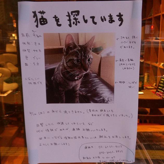 新宿区大久保です。9sariの9ちん。#猫 #迷い猫 #迷子 RT @mrkobayashi1970: 9ちゃん捜索願い。オフィスのマスコットが失踪中。いつもなら2、3時間で戻って来るのに日曜日に逃げ出して以来戻らず。無事を祈るのみ。 http://t.co/rDuPbLwHuL