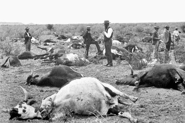 Peste bovina: segunda enfermedad infecciosa erradicada del planeta, x una #vacuna #microMOOC http://t.co/AYG0fBa1cR http://t.co/oYazjSLSVO