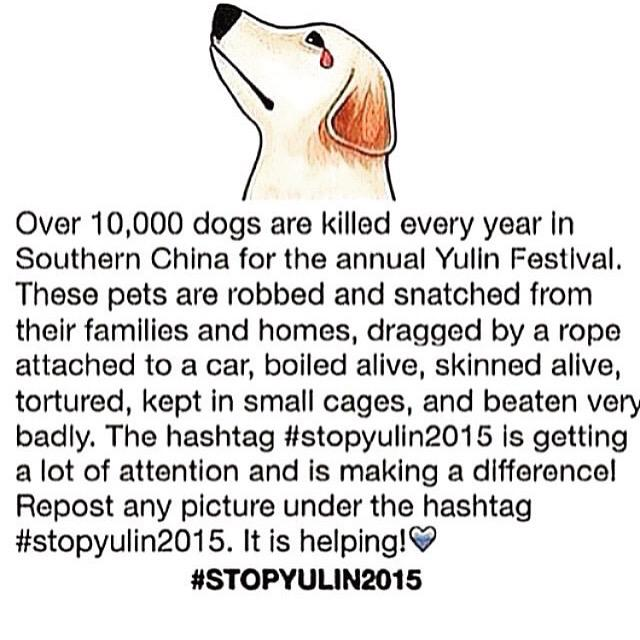 Pls help stop the torture of these innocent babies!Spread the word! #stopyulin2015 #StopYulinFestival #AnimalRights