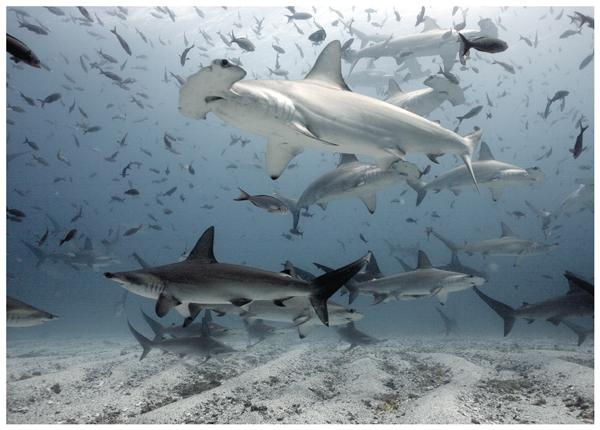 Depicted in pop culture as mindless killing machines, #sharks prove to be beautiful animals. http://t.co/qXb8VHhS0G http://t.co/A1M18ZPqX1