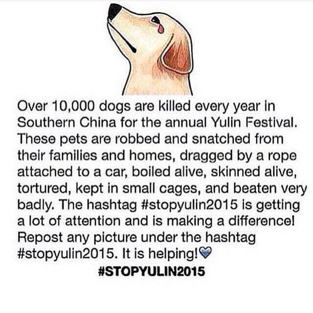 This disgusting vile 'festival' has to END!! PLEASE sign this petition http://t.co/lv1gcKT6wQ #StopYuLin2015 RT