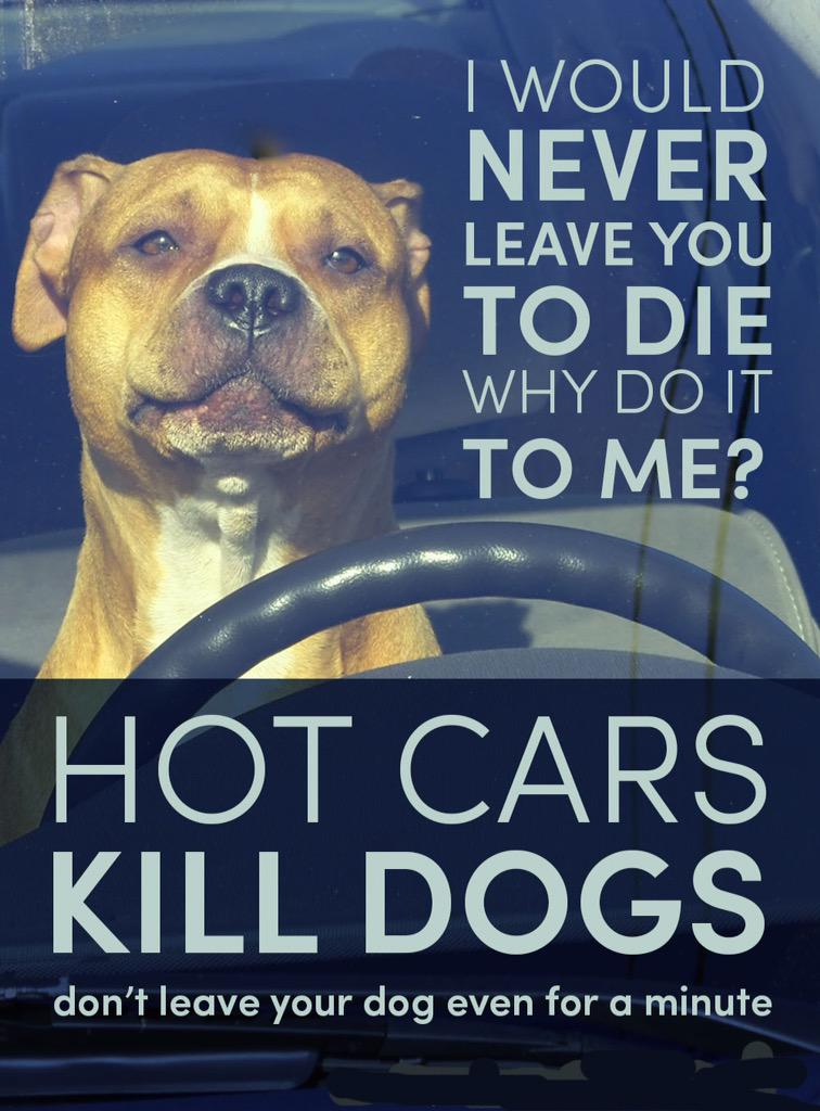 RT @happystaffie: @rickygervais please help us spread the message, people are still killing their dogs http://t.co/qZzzg1ccuz
