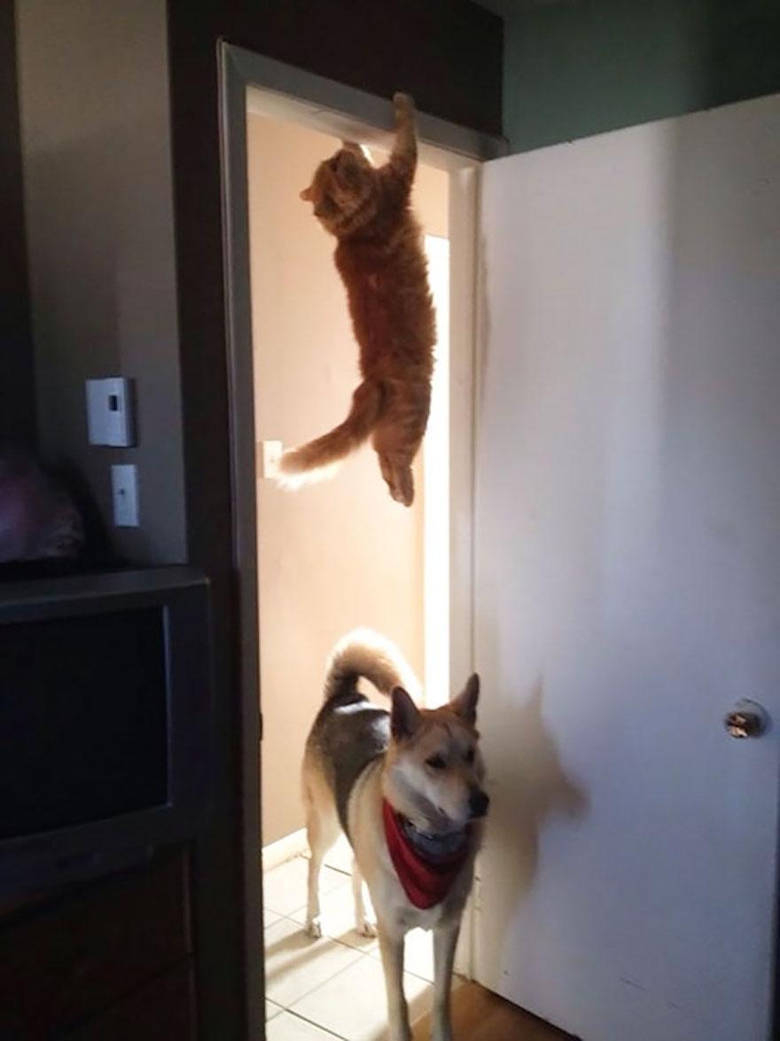 Cliffhanger Cat で検索したらこんな画像が出てきた(´ω`) pic.twitter.com/Cc9r15cSgF